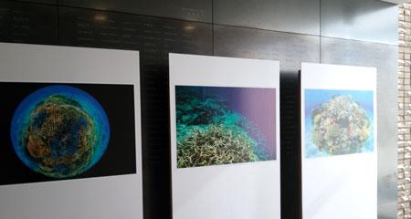 サンゴ礁学会2015