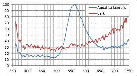 なんとか感光したホタルの発光スペクトルと環境光(暗闇)